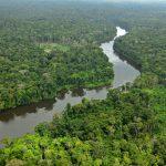 Enjoy the Great Amazon Rainforest in VR
