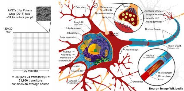 Nanites - Neuron vs Transistors Relative Size